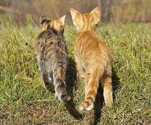 猫のしっぽの動きの意味-猫のしっぽが膨らむ時-猫のしっぽが立ってる時-感情-子猫画像
