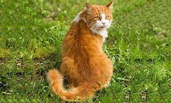 猫のしっぽの動きの意味-猫のしっぽが膨らむ時-猫のしっぽが立ってる時-感情-振り返り画像2
