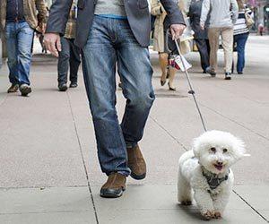 犬のしつけ-いつから-トイレ-無駄吠え-噛み癖-やってはいけない-しつけ方-散歩-画像