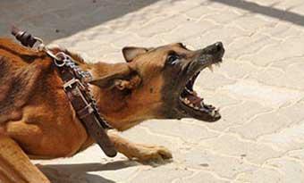 犬のしつけ-いつから-トイレ-噛み癖-散歩-やってはいけない-しつけ方-無駄吠え-画像2