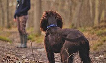 犬-散歩-歩かない-嫌がる-原因-突然-リード-引っ張る-吠える-理由-画像2