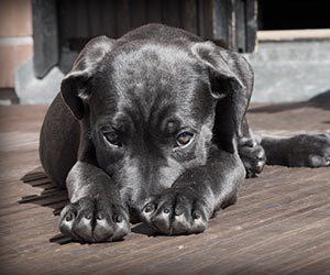 犬-家の中を走り回る-原因-突然-落ち着きがない-理由-画像