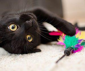 猫-夜鳴き-暴れる-理由-夜行性-鳴く-原因-寝れない-対策-遊ぶ画像
