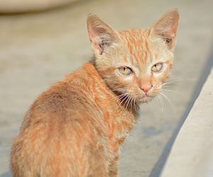 猫-噛む-理由-しつけ-突然-本気-噛んでくる-足-蹴る-意味-振り向く猫画像