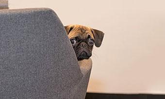 犬-ウンチを食べる-うれしょん-原因-理由-対策-困った顔-画像2