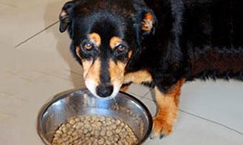 犬-食事中-吠える-怒る-唸る-理由-食べ過ぎ-ぐったり-苦しそう-フード画像2