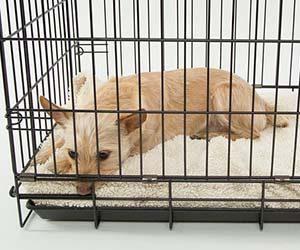 犬-留守番-何時間まで-限界-長時間-対策-ケージ-おもちゃ-トイレ-画像