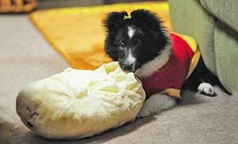 犬-留守番-何時間まで-限界-長時間-対策-ケージ-おもちゃ-トイレ-いたずら画像2