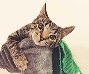 猫-テレビ-乗る-倒す-トイレットペーパー-イタズラ-対策-叱り方-散らかし画像