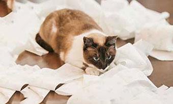 猫-テレビ-乗る-倒す-トイレットペーパー-イタズラ-対策-叱り方-画像2