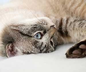 猫-鳴き声-意味-アオーン-クルル-ンー-ニャーオ-カカカ-短い-長い-低い-高い-鳴き方-種類-猫の気持ち-アオーン画像