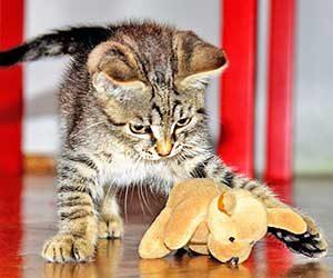 猫-鳴き声-意味-アオーン-クルル-ンー-ニャーオ-カカカ-短い-長い-低い-高い-鳴き方-種類-猫の気持ち-シュッ画像