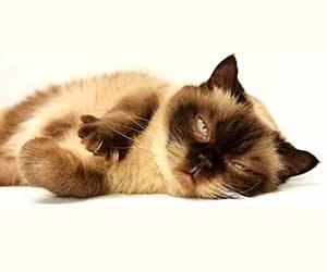 猫-鳴き声-意味-アオーン-クルル-ンー-ニャーオ-カカカ-短い-長い-低い-高い-鳴き方-種類-猫の気持ち-ゴロゴロゴロ画像