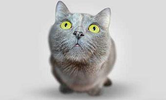 猫-鳴き声-意味-アオーン-クルル-ンー-ニャーオ-カカカ-短い-長い-低い-高い-鳴き方-種類-猫の気持ち-ニャッ画像2