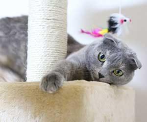猫-おもちゃ-遊ばない-飽きる-遊び方-タワー-画像
