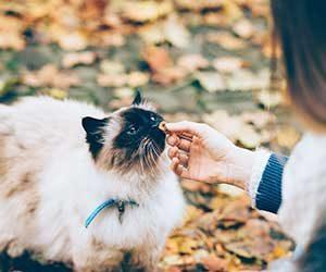 猫-ご飯-少し-残す-原因-フード-出しっぱなし-手であげる-画像