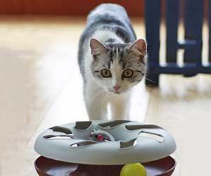 猫-おもちゃ-遊ばない-飽きる-遊び方-興味をもつ-画像