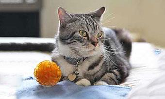 猫-おもちゃ-遊ばない-飽きる-遊び方-ボール-画像2