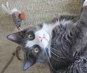 猫-おもちゃ-遊ばない-飽きる-遊び方-コミュニケーション-画像