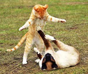 猫-シニア-何歳から-平均寿命-子猫期-画像
