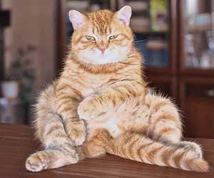 猫-シニア-何歳から-平均寿命-画像