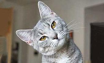 猫-シニア-何歳から-平均寿命-成猫期-画像2