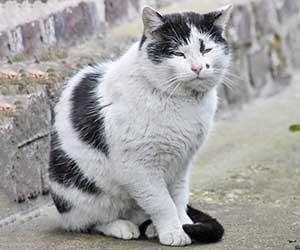 猫-シニア-何歳から-平均寿命-シニア猫期-画像