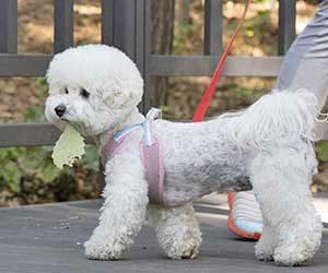 初めて犬を飼う-犬種-準備-費用-散歩-画像