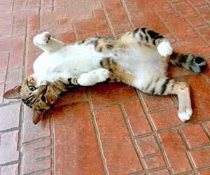 猫-頭-体をこすりつける-理由-腹見せ-画像