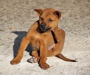 犬-ブルブル震える-あくびをする-後ろ足でかく-ストレス-不安-画像