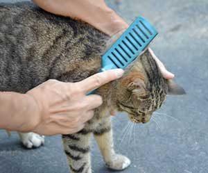 猫-ブラッシング-やり過ぎ-やり方-頻度-画像