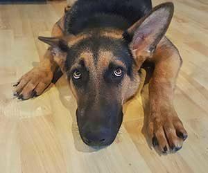 犬-ブルブル震える-あくびをする-後ろ足でかく-ストレス-伏せ-画像