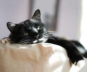 猫-頭-体をこすりつける-理由-あご乗せ-画像