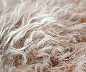 猫-ブラッシング-やり過ぎ-やり方-頻度-毛-画像