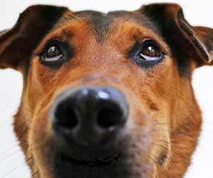 犬が鼻をつけてくる理由-画像