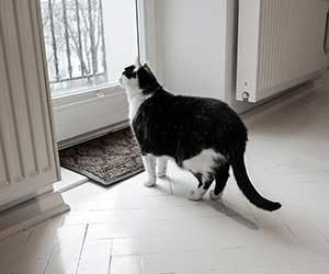 外猫を家猫にする方法-窓画像