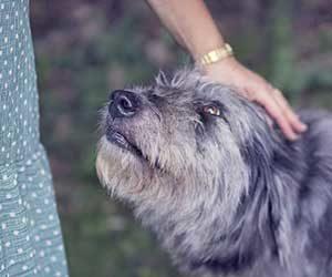 犬が鼻をつけてくる理由-撫でる-画像