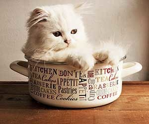猫-前足-たたむ-フミフミ-前足でチョンチョン-狭い所-画像