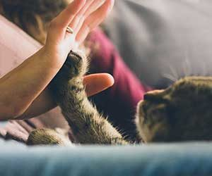 猫-人間-いつ-どこで-画像