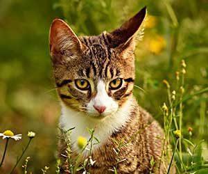 猫の顔-目-口-ヒゲ-猫の気持ち-耳-画像