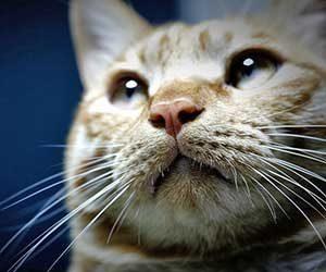 猫の顔-目-耳-口-猫の気持ち-ヒゲ-画像