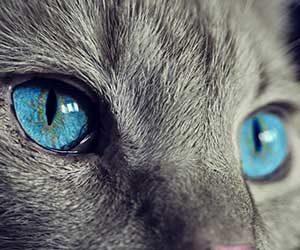 猫の顔-耳-口-ヒゲ-猫の気持ち-目-画像