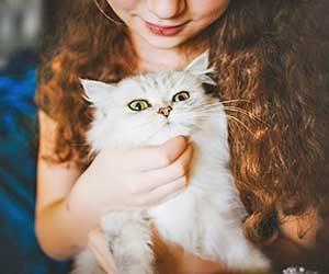猫が撫でられて嬉しい場所-タイミング-顎-画像