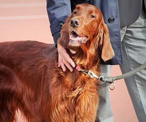 犬に信頼される方法-画像2