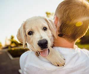 犬に信頼される方法-画像1