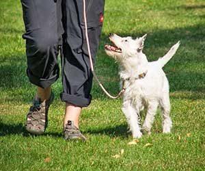 犬-拾い食いをやめさせる-方法,原因-防止グッズ-散歩-画像