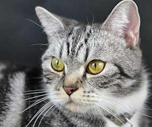 猫が外を眺める-理由-画像
