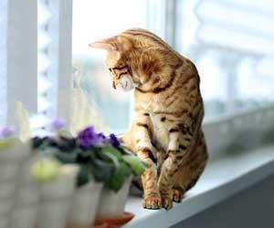 猫が外を眺める-理由-窓-画像