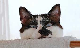 猫-トイレ以外で尿-原因-対策-画像