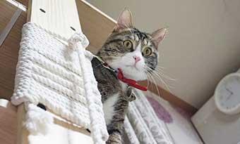 猫-肩に乗る-理由-背中に乗ってくる-キャットタワー-画像